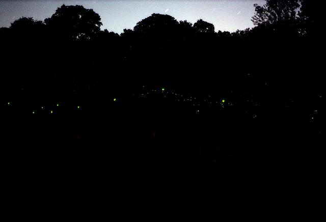 fireflies_Derek Bever