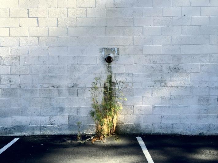 parking_lot_plant