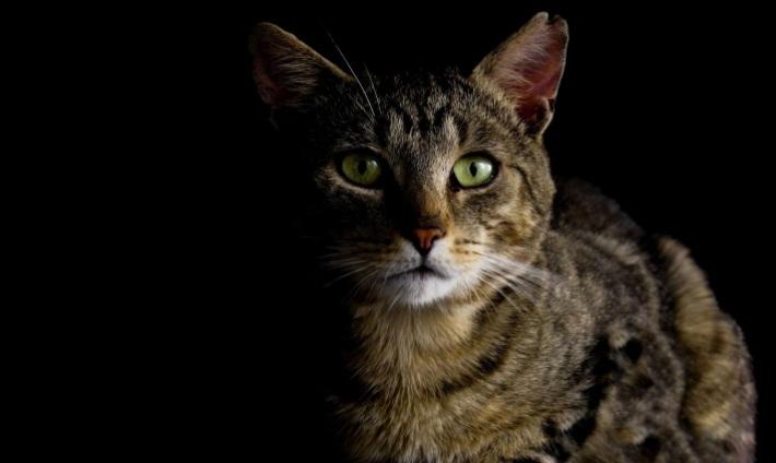 cat-987528_monicore
